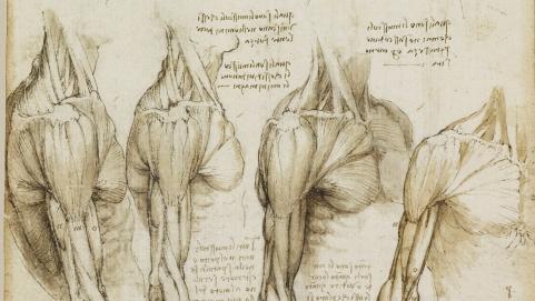 1b9d79ef67d5db4f43a7b7c235603838_vitruvian-man-lessons-tes-teach-anatomy-drawings-by-leonardo-da-vinci_1600-900